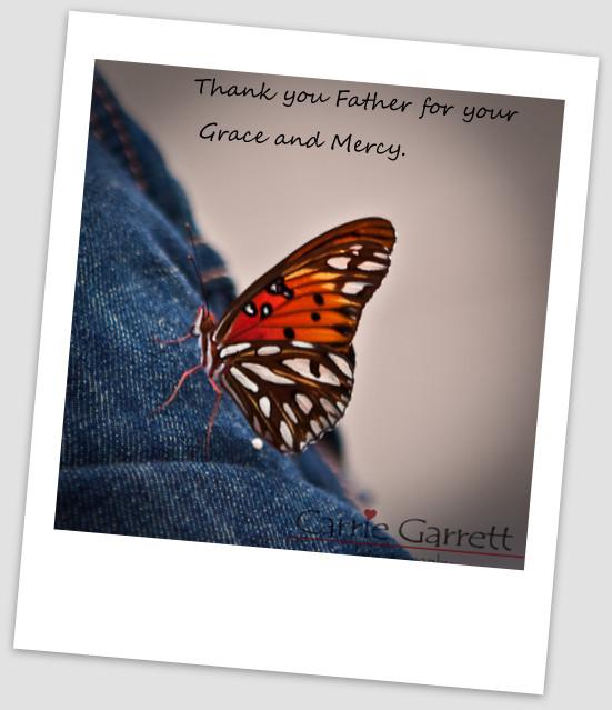 09-butterfly 4